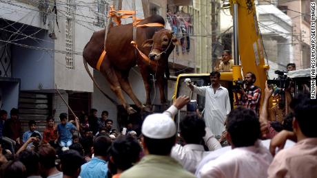 Pakistani residents watch as a crane lifts a bull from the roof of a building in preparation for Eid al-Adha in Karachi
