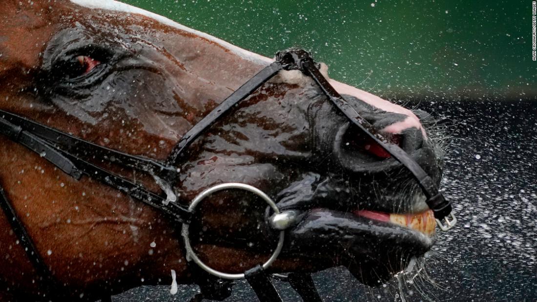 Saudi Arabia to stage record $20M horse race - CNN