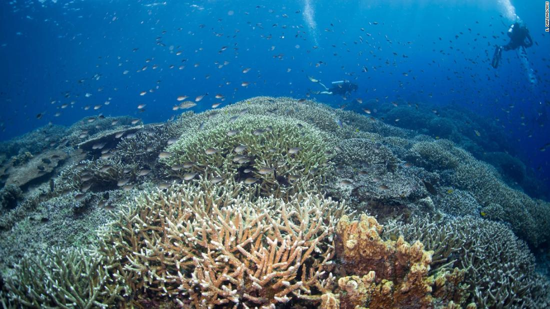 Scientists studied 2,500 coral reefs to figure out how to save them - CNN