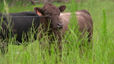 Vital Signs meat beef cow plants_00003311.jpg