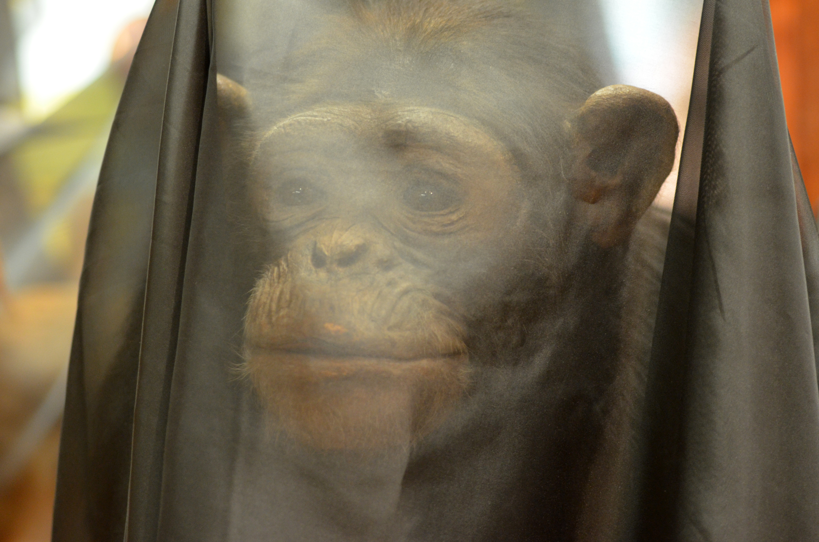 Animal exhibits draped in veils to mourn extinction crisis