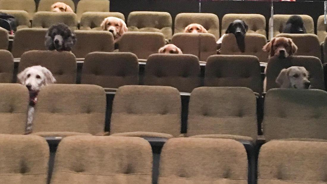A crew of Canadian service dogs watched a live musical as part of their training - CNN