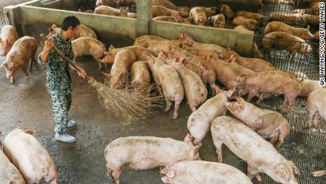 China could release emergency pork reserves after losing 100 million pigs to swine fever
