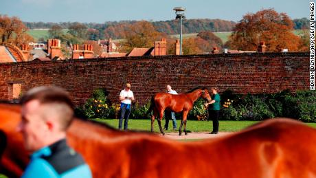 Potential buyers can inspect horses before the auction.