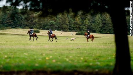 Horses exercise at the Curragh ahead of racing.