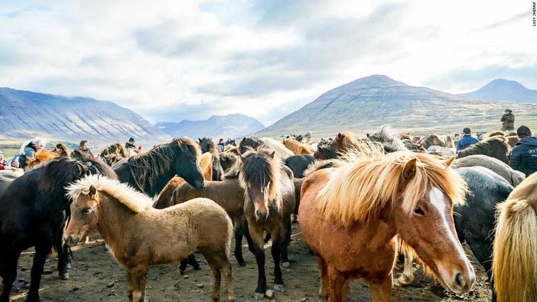 Iceland's massive Laufskálarétt horse party is a wild and windswept ride