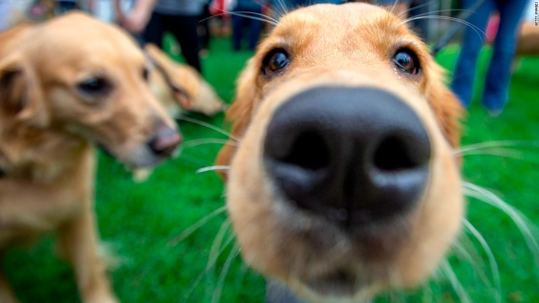 Owning a dog reduces your risk of dying early, study finds
