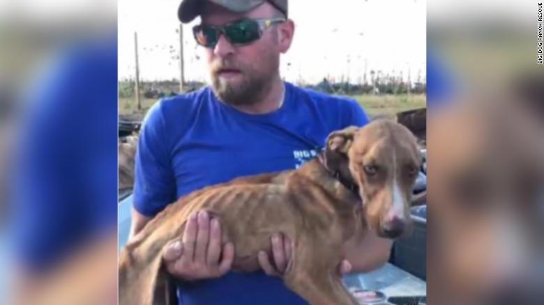Dog found alive under debris a month after Hurricane Dorian hit Bahamas
