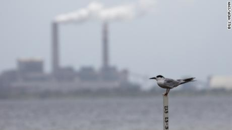 Climate change threatens bird species with extinction, study says