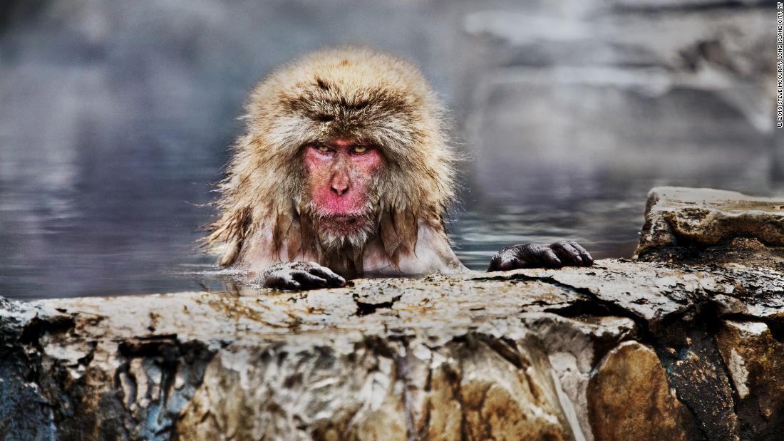 Fotos zeigen die komplexe Beziehung zwischen Mensch und Tier