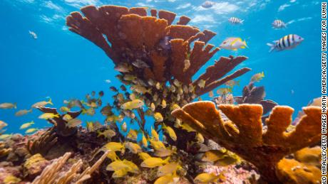 Ocean Acidification Is Causing Ecological Imbalance