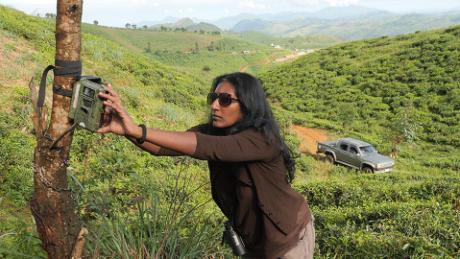 انجلی واٹسن ایک حرکت دریافت کرنے والے کیمرہ کو ایک درخت سے جوڑتی ہیں۔