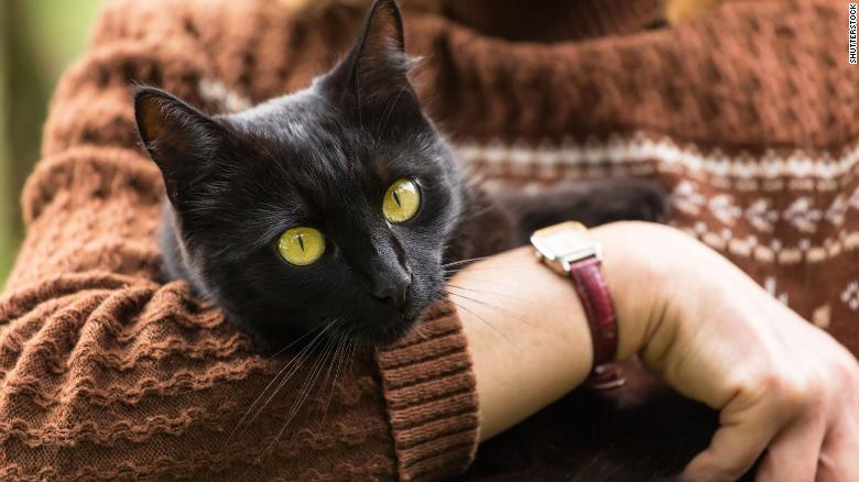 Vets say cats from COVID-19 households shouldn't be let outside