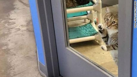 A Cat Houdini Resides at a Houston Animal Shelter