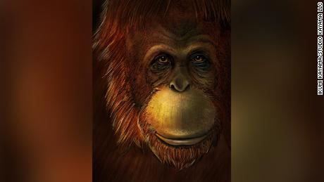 Scientists retrieve genetic materials from giant ape fossil