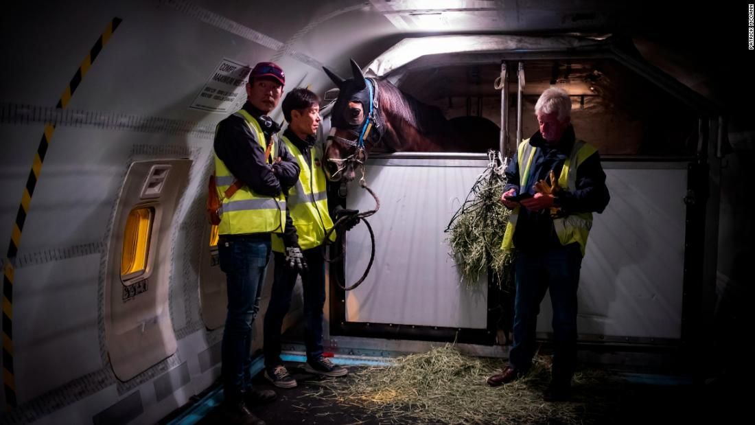 Air Horse One: The wonderful world of equine air travel