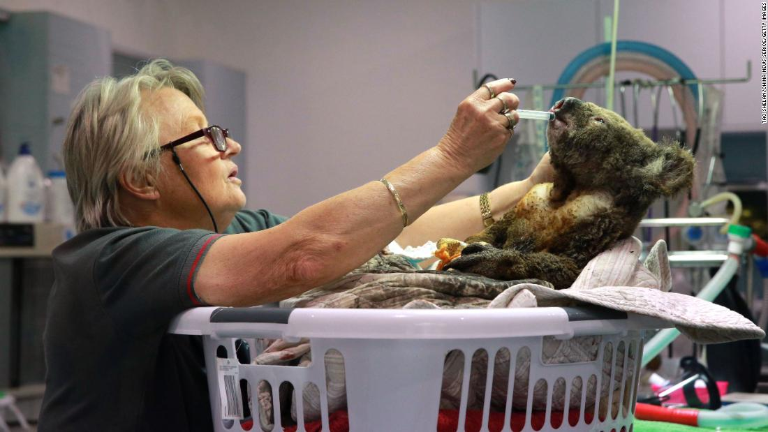 "An injured koala receives treatment after its rescue from a bushfire at the Port Macquarie Koala Hospital on November 19. The hospital said the fires have ""decimated"" the area, which is a key habitat and breeding ground for the marsupials. 多于 <a href=""https://www.cnn.com/2019/10/30/australia/koala-fires-australia-intl-scli/index.html"" 目标=""_空白&qu报价amp;gt;350 koalas are feared to have been killed</一个> by bushfires in NSW, according to animal experts."