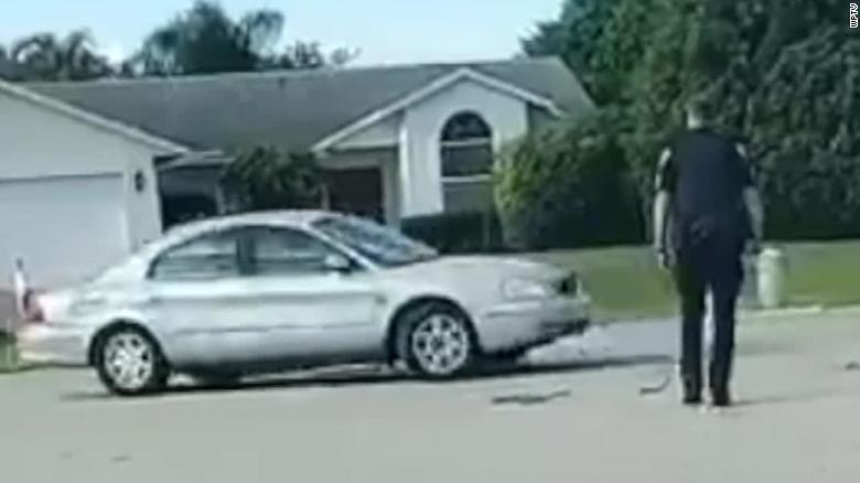 Florida dog puts vehicle in reverse, drives in circles for an hour