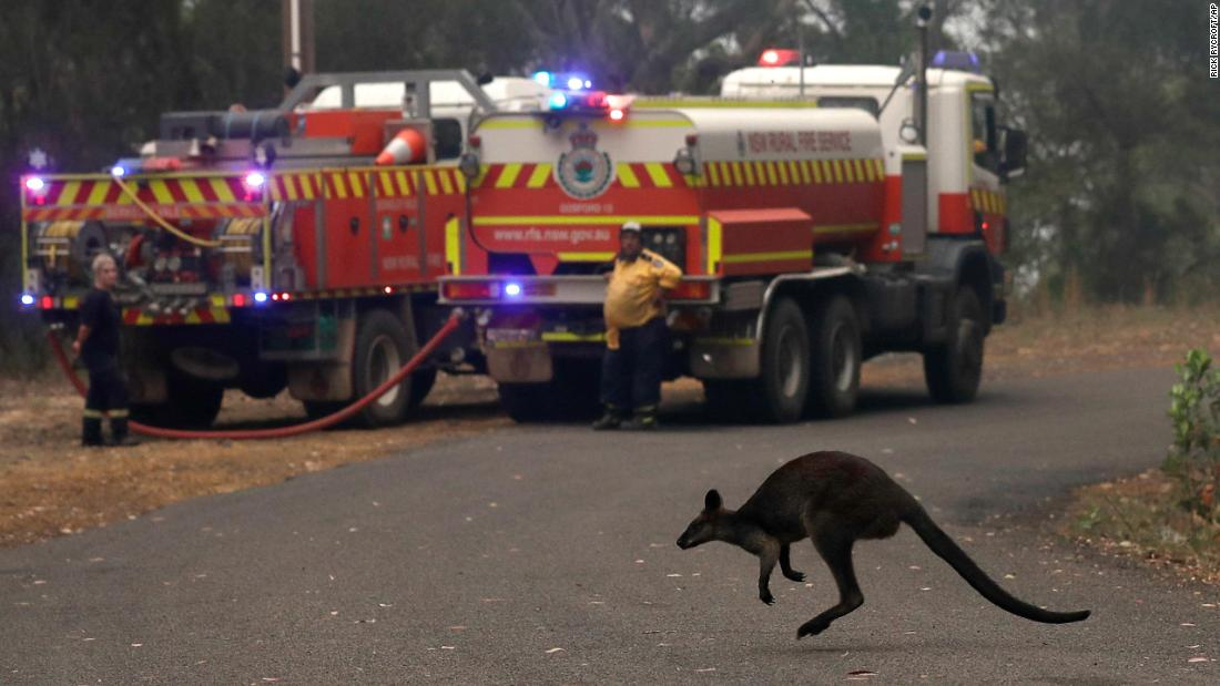 A wallaby flees a fire burning near Mangrove Mountain, north of Sydney, 在十二月 10.