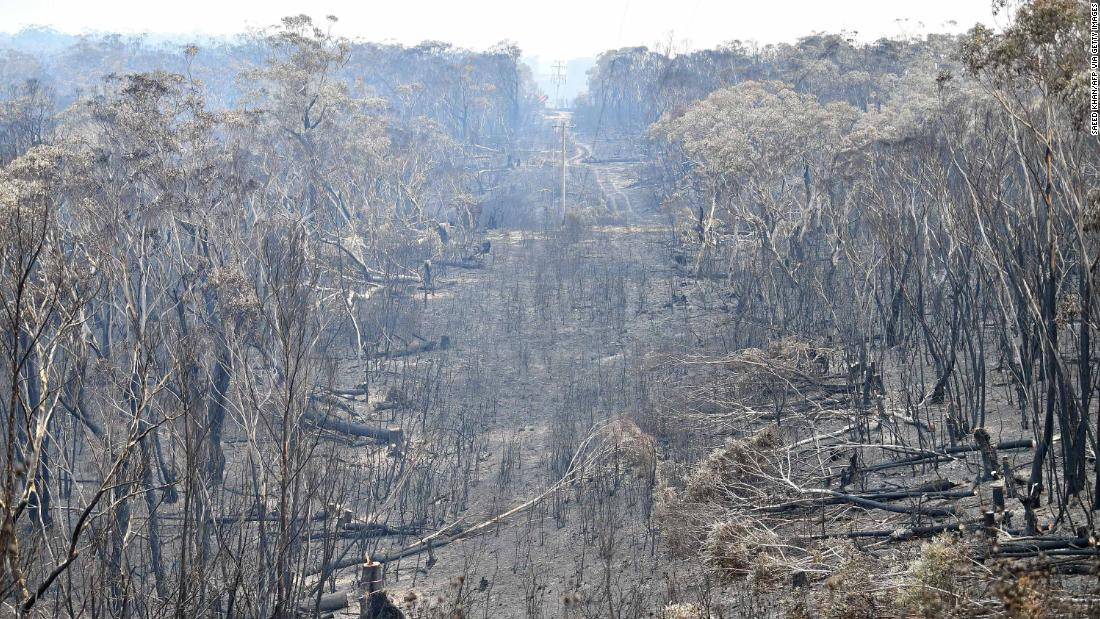 A landscape of burnt trees is pictured after a bushfire at Mount Weison, in the Blue Mountains, 在星期三, 十二月 18.