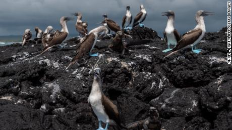 Fuel spill off Galapagos Islands