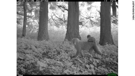 محققین نے پلانٹ کے آس پاس کے علاقوں میں 20 سے زیادہ پرجاتیوں کی تصاویر پر قبضہ کیا ، جن میں میکے بندر بھی شامل ہیں۔