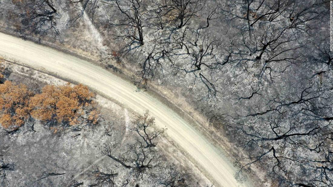 An aerial view shows a track running through trees that were scorched by bushfires in East Gippsland, 澳大利亚, 星期四, 一月 9.