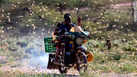 East Africa is suffering its worst invasion of desert locusts in 25 years