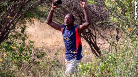 A man walks through a locust swarm in Kenya on 22 January 2020, Samburu County, Ololokwe, Kenya.