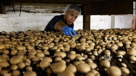 Move over, kale: Mushrooms are the new grocery aisle celebrities