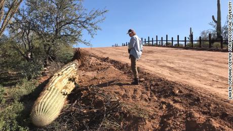 """They're bulldozing a huge amount of pirstine habitat,"" says Laiken Jordahl of the Center for Biological Diversity."