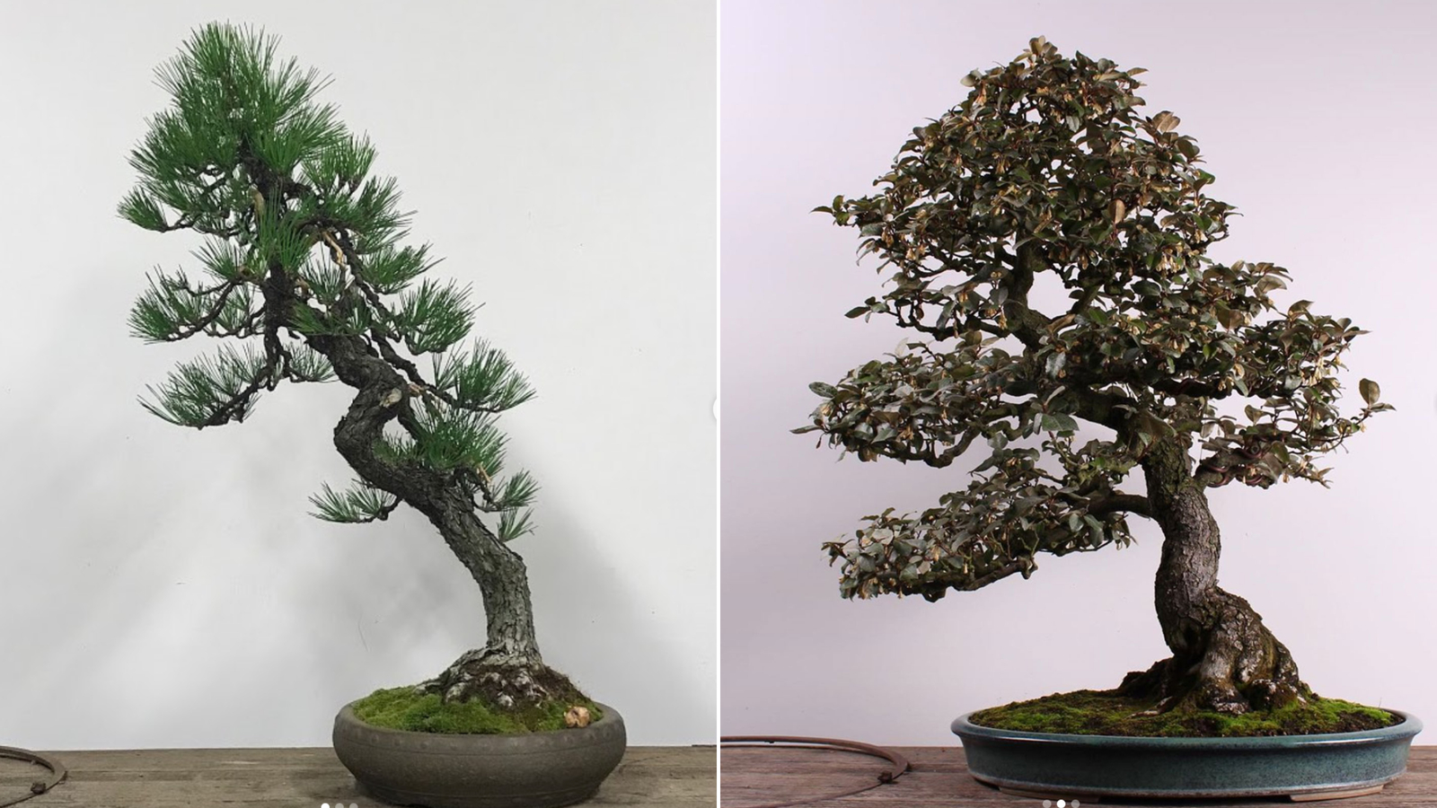 Thieves Stole Bonsai Trees Worth Thousands The Museum Just Wants Them Back Cnn Travel