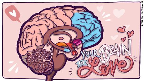 Are you in love or just high on chemicals in your brain? Answer: Yes