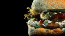 Burger King's moldy Whopper