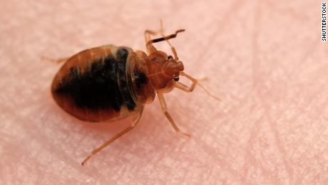 France launches bedbug hotline in campaign to stamp out the itchy menace