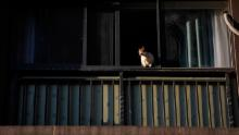 A cat lies on the windowsill on February 16, 2020 in Wuhan, Hubei province, China.