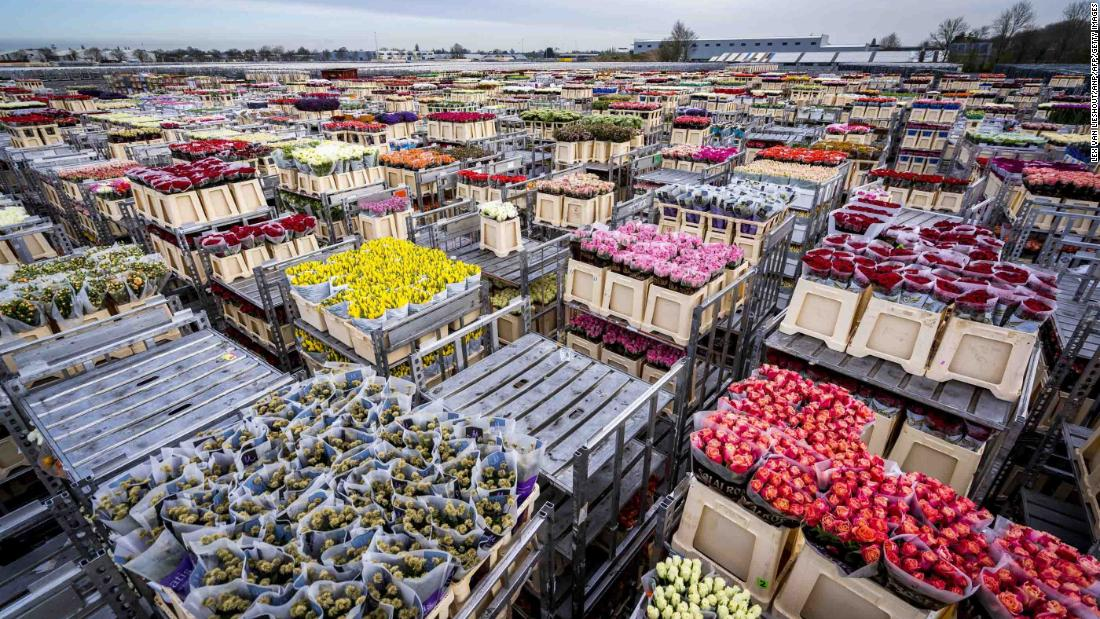 Flowers are stored prior to their destruction at a flower auction in Aalsmeer, Netherlands, on March 16. Lower demand due to the coronavirus outbreak is threatening the Dutch horticultural sector, forcing the destruction of products.