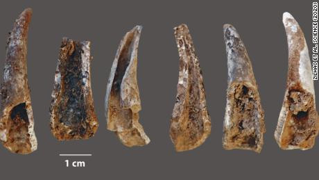 Cracked-open and burnt fragments of crab pincers were also found in the cave.
