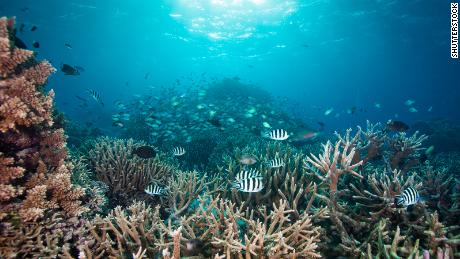 Coral reefs are facing their own pandemic -- but we have a survival guide