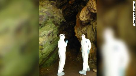 To catch the bats, EcoHealth Alliance's scientists have to set up nets at the entrance of the cave. To avoid any contact with the bats, they wear hazmat suits, a respirator and gloves.