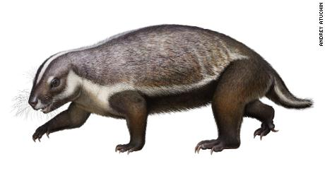 Questo 'crazy beast' was a weird early mammal that lived among dinosaurs