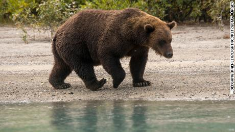 Rules allow increased hunting, trapping in Alaska preserves