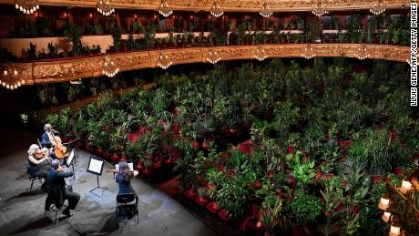 The Uceli Quartet performed for an audience composed exclusively of potted plants in Barcelona's Liceu Grand Theatre on June 22.