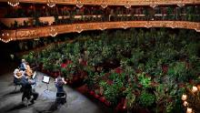 The Uceli Quartet perform for plants at the reopening of Barcelona's Liceu Grand Theatre on Monday.