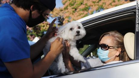 Animals unlikely to spread Covid-19 to humans, but precautions can help keep people and their pets safe, says CDC