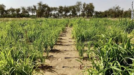 This startup wants to turn Dubai's desert into farmland