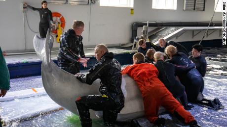 El equipo de Sea Life Trust tiene a Little Grey