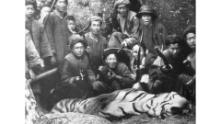 A tiger that was hunted in Fujian, China, in 1921. The photograph was taken by William Lord Smith, a British hunter who organized the hunt and shot the tiger.