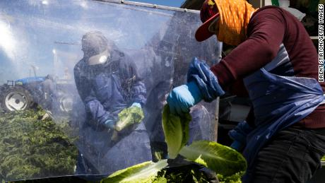 Farm laborers harvest romaine lettuce on a machine with heavy plastic dividers that separate workers from each other on April 27, in Greenfield, California.