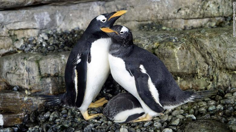 Cuddling penguins and snorkeling alligators: What animals do to stay warm during extreme cold
